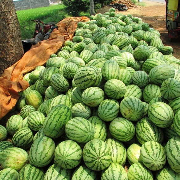 watermelon-331276_640